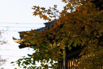 本門寺の紅葉