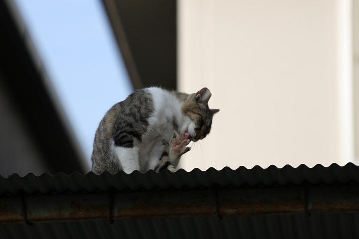 猫撮りの聖地・谷中