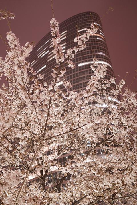 metropolitan bloom