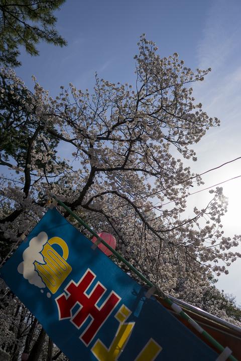 世の中に 絶えて桜の なかりせば