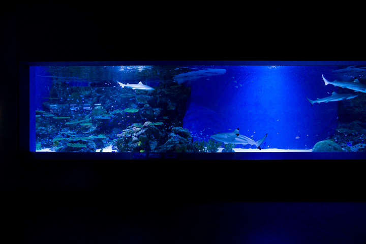 NIGHT AQUARIUM