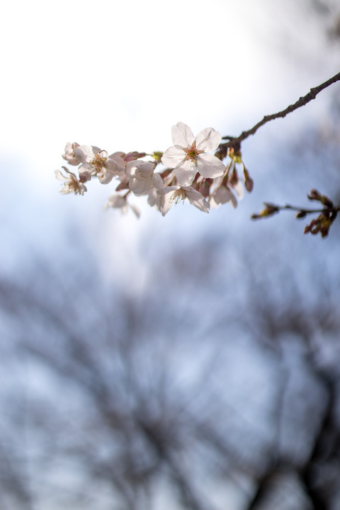 the Art of Blossoms