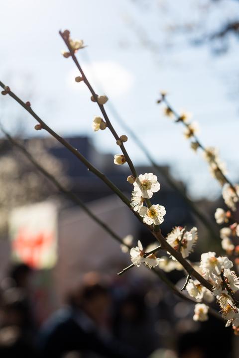 梅の花咲くころ