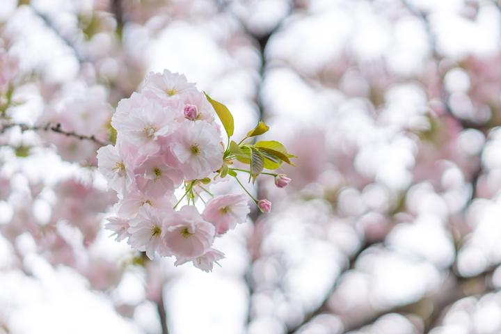 春が来てぼくら